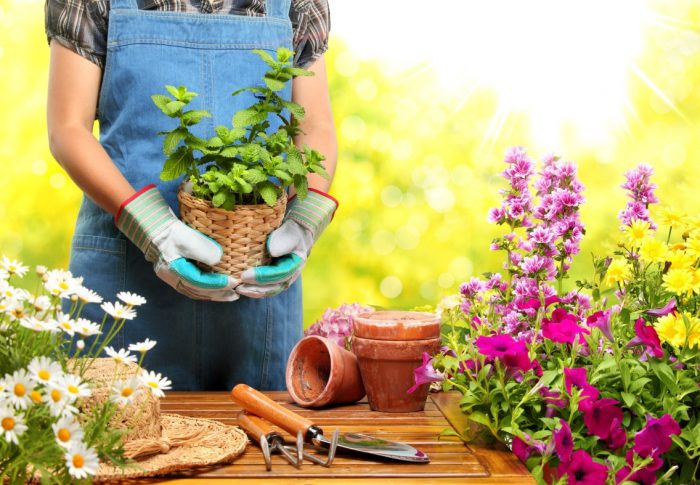 How To Have A Perfect Garden In Your House?
